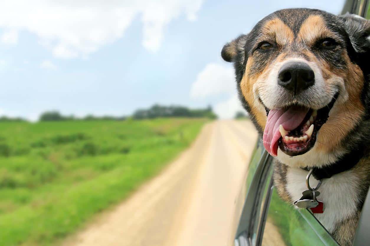 Wohnmobil Für 6 Personen & Hund: Alle Infos Dazu Hier!